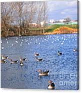 Wintering Birds - Mayesbrook Park Canvas Print