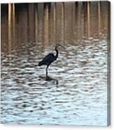 Winter's Blue Heron Canvas Print