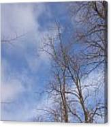 Winter's Blue Sky Canvas Print