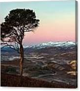 Winter's Dawn Canvas Print