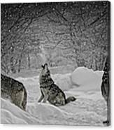 Winters Eve Howling Canvas Print