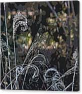 Winters Flourishes  Canvas Print