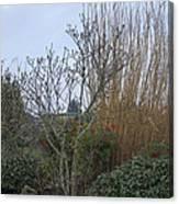 Winters Garden In Seattle  Canvas Print
