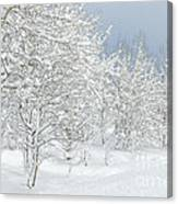 Winter's Glory - Grand Tetons Canvas Print