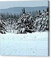 Winter's Love  Canvas Print