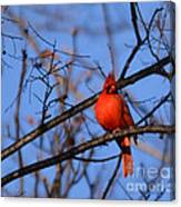 Winter's Red Beauty 5 Canvas Print
