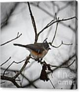Winter's Tufted Titmouse Canvas Print