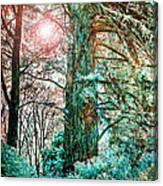 Wintersun Canvas Print