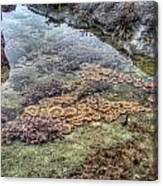 Wintertime At Botanical Beach Canvas Print