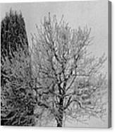 Wintery Tree Canvas Print
