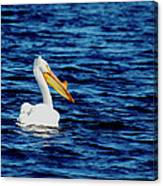 Wisconsin Pelican Canvas Print