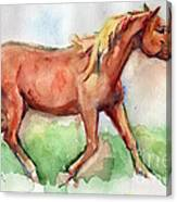 Horse Painted In Watercolor Wisdom Canvas Print
