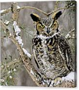 Wise Old Great Horned Owl Canvas Print