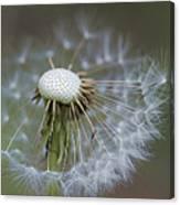 Wispy Dandelion Fluff Canvas Print