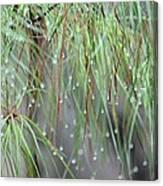 Wispy Winter Raindrops Canvas Print