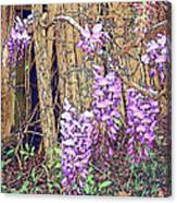 Wisteria And Old Fence Canvas Print