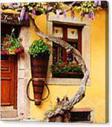 Wisteria And Yellow Wall In Alsace France Canvas Print
