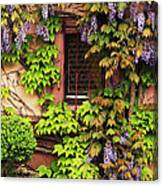 Wisteria On A Home In Zellenberg France 3 Canvas Print