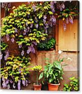 Wisteria On Home In Zellenberg France Canvas Print