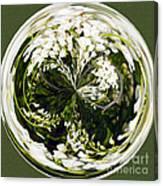 Wisteria Orb Canvas Print