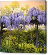 Wisteria Trellis 2 Canvas Print