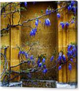 Wisteria Wall Canvas Print
