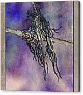 Witchride Canvas Print