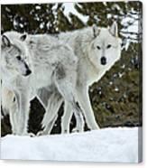 Wolf - Friend Canvas Print