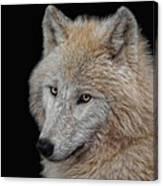 Wolf Bride Canvas Print