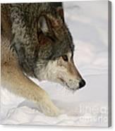 Wolf Dreams Canvas Print