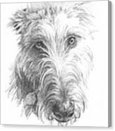 Wolf Hound Pencil Portrait Canvas Print