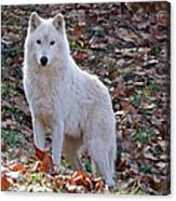 Wolf In Autumn Canvas Print