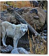 Wolf In The Wild Canvas Print