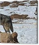 Wolf Pair Canvas Print