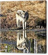 Wolf Pup Reflection Canvas Print