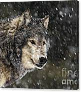 Wolf - Snow Storm Canvas Print