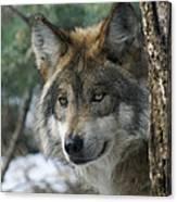 Wolf Upclose Canvas Print