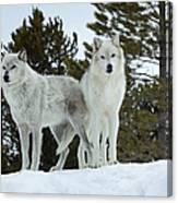 Wolves - Partners Canvas Print