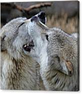 Wolves Playing Canvas Print
