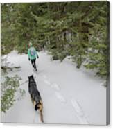 Woman And Dog Walking In Forest Canvas Print