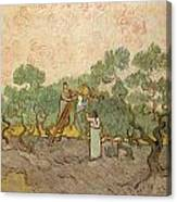 Women Picking Olives Canvas Print