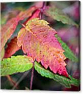 Wonder Leaf Canvas Print