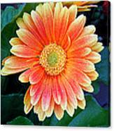 Wonderful Daisy Canvas Print