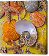 Wonderful Sea Life Canvas Print