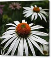 Wonderful White Cone Flower Canvas Print