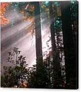 Wonderland Sunbeams Canvas Print
