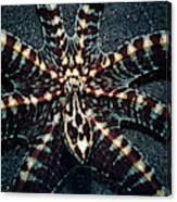 Wonderpus Octopus Canvas Print