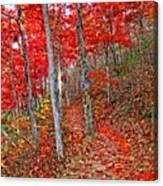 Wonders Of Autumn  Canvas Print
