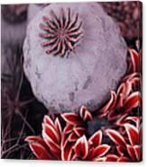 Wonderworld Of Flowers Canvas Print