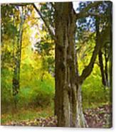 Wondrous Tree Canvas Print